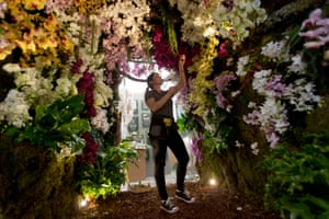 A worker puts the finishing touches to a tunnel of orchids at The Story of Phalaenopsis display