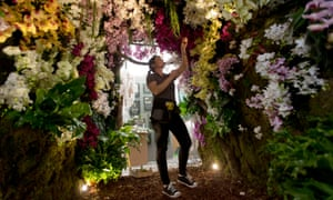 A worker puts the finishing touches to a tunnel of orchids at The Story of Phalaenopsis display.