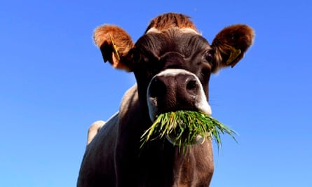 The New Zealand National party says methane reduction targets for the country's huge dairy sector are too high.