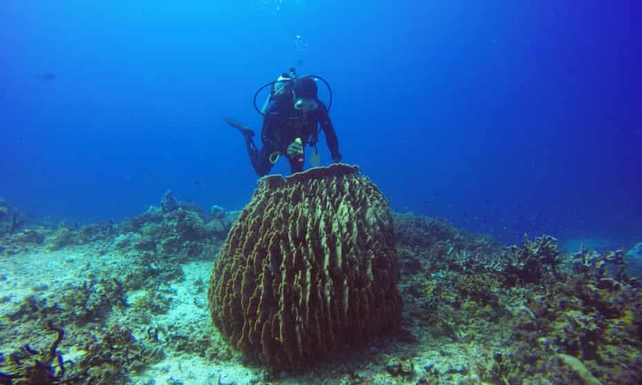 Diving off Kimbe Bay.