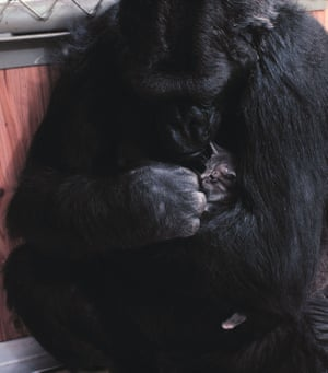 Koko and her kitten, All Ball.
