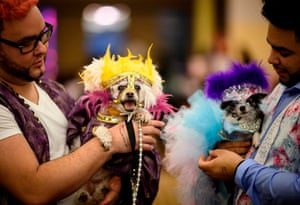 The event coincides with New York fashion week and the Westminster Kennel Club dog show