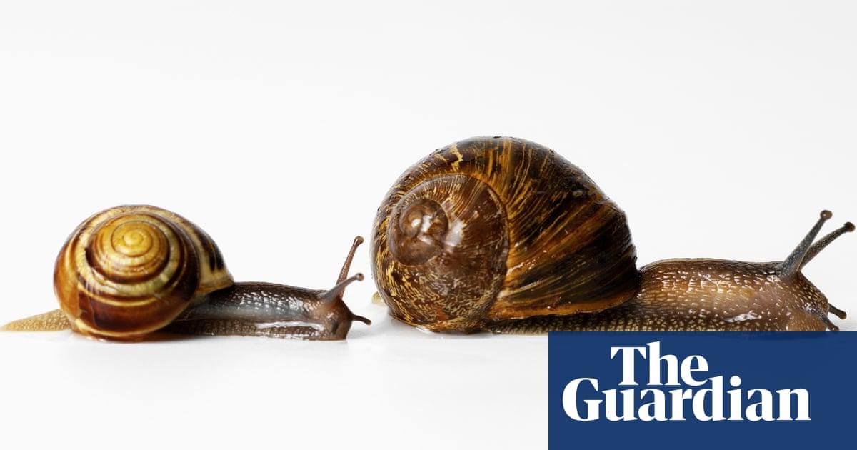 A half-shaven head? A handbag of snails at a cocktail party? I just adore a true eccentric
