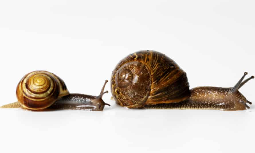 Two snails racing