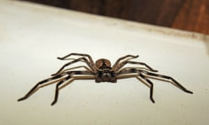 A Perth man apologised when a team of police officers showed up at his house. A passerby called police when they heard a toddler screaming and a man repeatedly shouting 'Why don't you die?' He was apparently just trying to kill a spider.