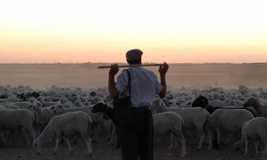 Magic-hour hues … The Shepherd.
