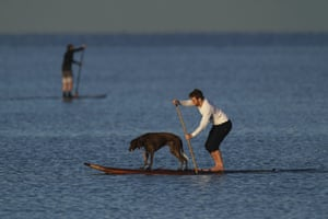 Melbourne, Australia A man on a paddle board takes a dog for a ride at Mordialloc beach