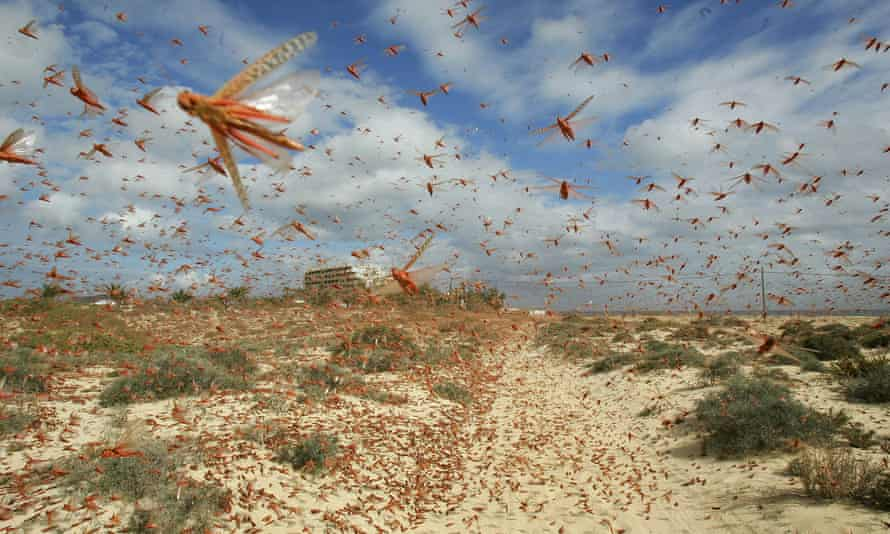 Flying bugs are a significant feature in my pandemic dreams, according to a survey of more than 2,000 people.