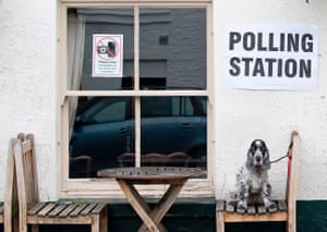 Tilly, a cocker spaniel, perches on a seat outside the Anglesea Arms pub, set up as a polling station in London