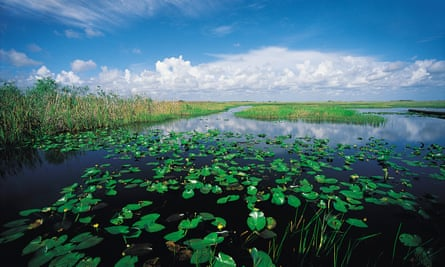 The Everglades in Florida is home to mangrove forests and cypress swamps housing alligators, orchids, storks, ibises, and threatened species.