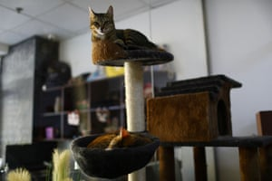In 2018 UAE authorities made it illegal to abandon animals