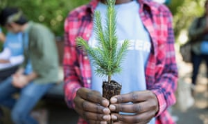 Close up of volunteer holding tree sapling