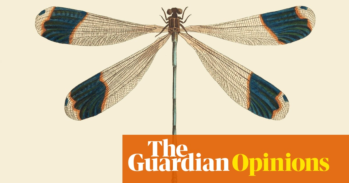 The nature of a dragonfly: weigher of souls