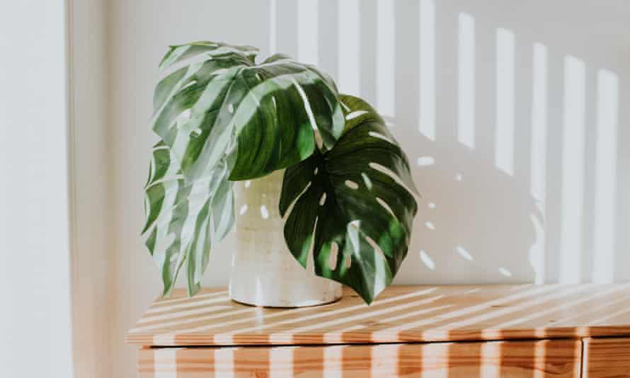 A minimalist desk plant.