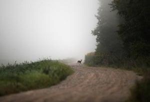 A deer walks in mist covering a meadow near the village of Lyubcha, Belarus