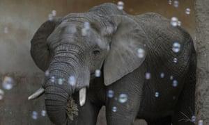 Elephant in warsaw