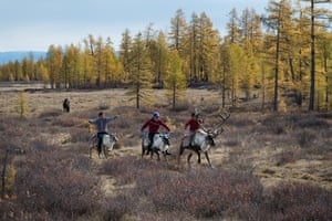 Three young boys on reindeers next to a forest