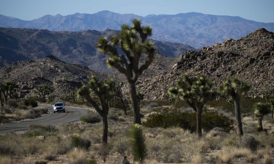 Joshua Tree national park in southern California's Mojave desert.