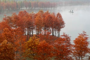 Huai'an, China. Fishermen cast their nets at Lake Tianquan, in the middle of a redwood forest