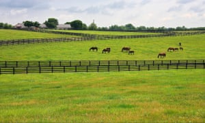 A horse farm in Kentucky. A $500 reward is being offered for information on the shootings.