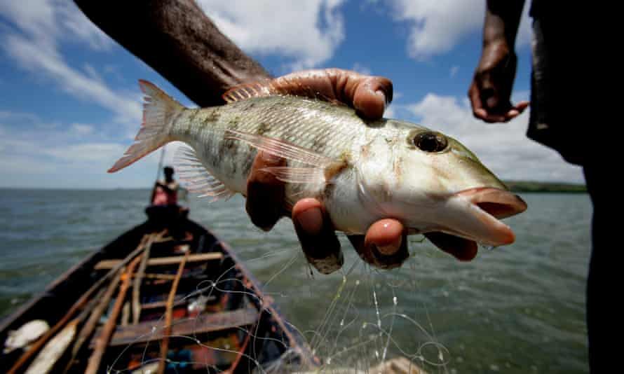 Fish caught in Tikina Wai, Fiji