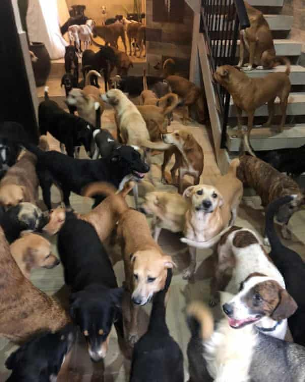 Ricardo's ark: Mexican man opens his home to 300 dogs in path of hurricane  | Animals | The Guardian