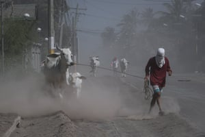 Agoncillo, PhillipinesResidents pull their cows along a road. The Philippine Institute of Volcanology and Seismology (PHIVOLCS) has kept the alert level at four, following Taal Volcano's eruption on 12 January 2020