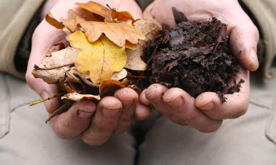 Man holding oak leaves in one hand and leaf mulch in the other hand to show the breaking down process