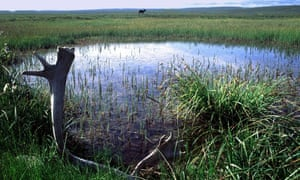 Projects Trump administration believes could be fast-tracked include gas leasing development plan in the Arctic National Wildlife Refuge in Alaska.