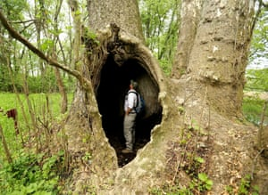 Alistair Reynolds stands in the hollowed out trunk of the record holder for the largest Eastern Sycamore in the US, in Ashland County, Ohio