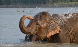 An elephant enjoys a paddle at Tiger Tops Elephant Camp.