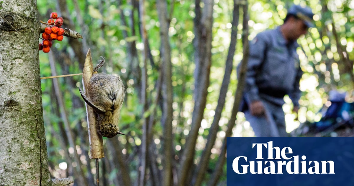 Snared: catching poachers to save Italy's songbirds