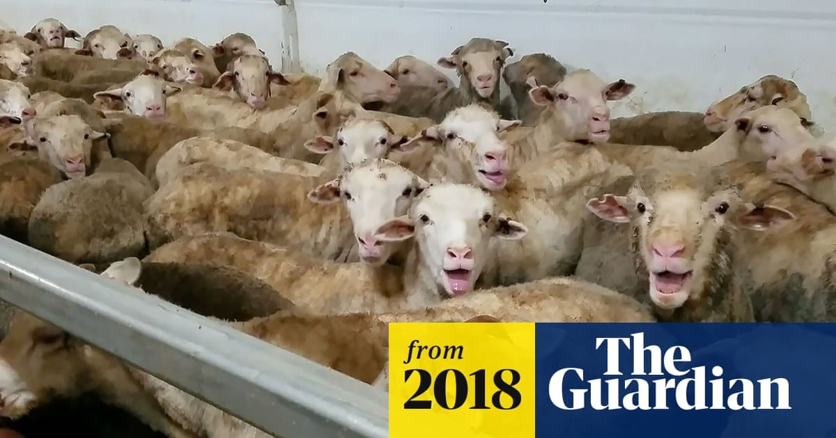 Coalition MPs introduce bill for ban on live exports, saying