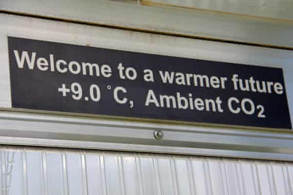 As part of the Spruce experiment studies in a controlled setting mimic and study the effects of a warmer atmosphere. The signs notes that inside the chamber the temperature is 9 °C hotter than the ambient air