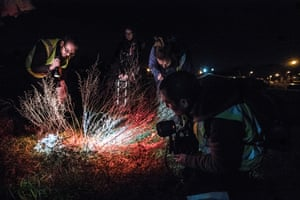Volunteers looking for beetles with torches at night