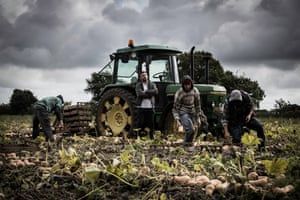 Workers in the farming sector