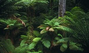 Rainforest in NSW