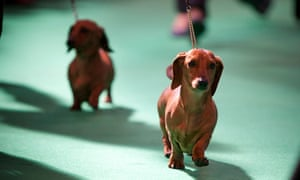 Crufts at the NEC.