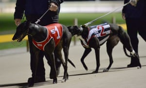 Owners parade greyhounds before a race at Wentworth Park in Sydney.