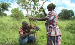 Stephen Tumhaire and Florence Namembwa, both beneficiaries of the farmer managed natural regeneration scheme, attend to regenerating trees in their Chamkama village, Uganda.