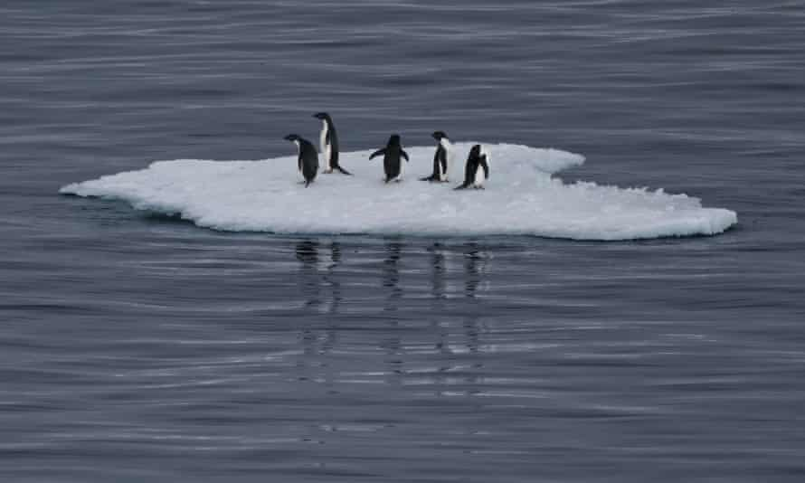 Adélie penguins stand on an iceberg in the Southern Ocean, Antarctica.