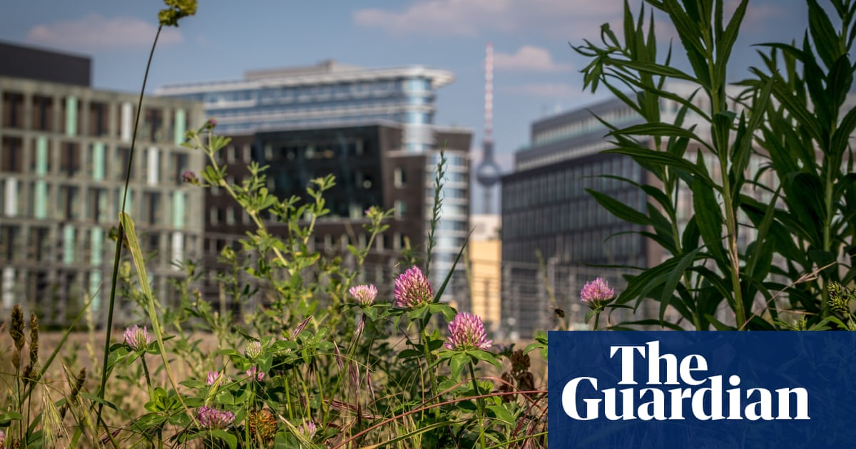 Bee-friendly urban wildflower meadows prove a hit with German city dwellers