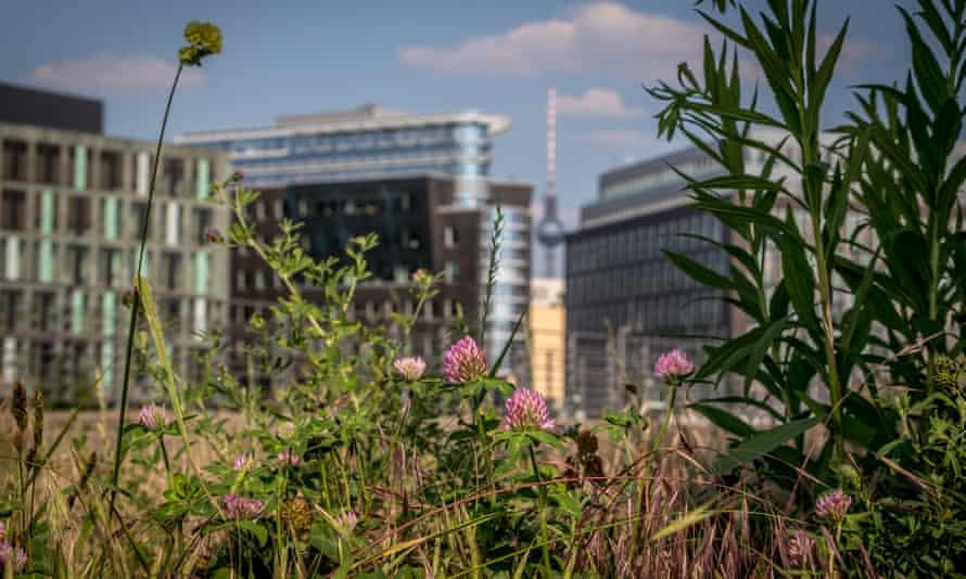 Wild bees in Berlin