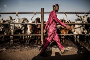A cattle buyer looks for deals at Kara cattle market in Lagos