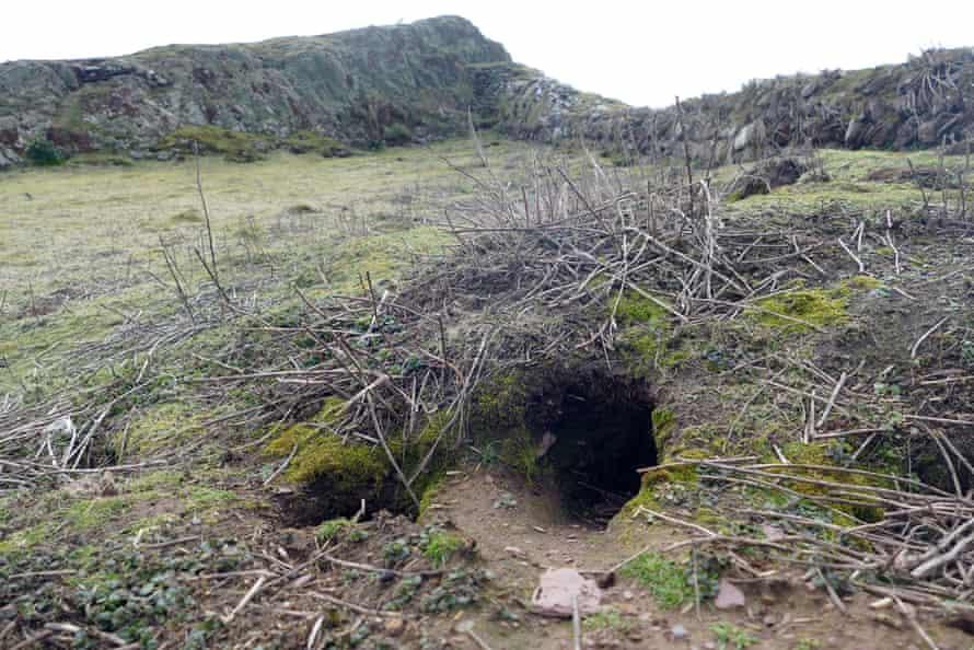 Entrance to a rabbit warren on Skokholm Island