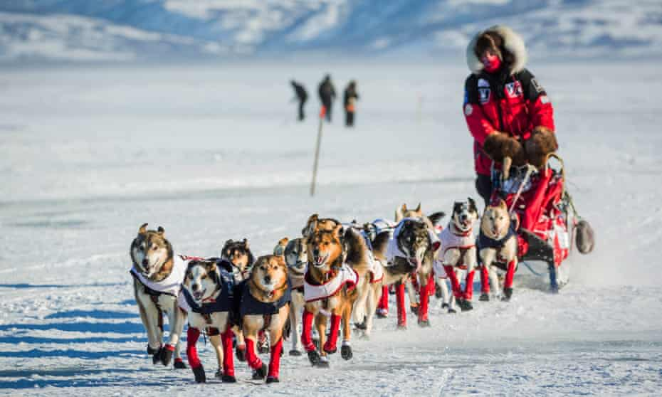 Aliy Zirkle mushes into the Unalakleet checkpoint in second place in the Iditarod in 2015.