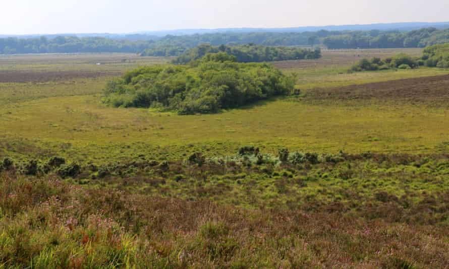 The view towards Lyndhurst