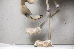 Flamingo Socks by Jasper Doest