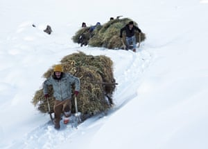 Farmers carry fodder by sled to feed their animals in Muş, Turkey