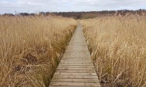 Boardwalk in Gosforth Park nature reserve